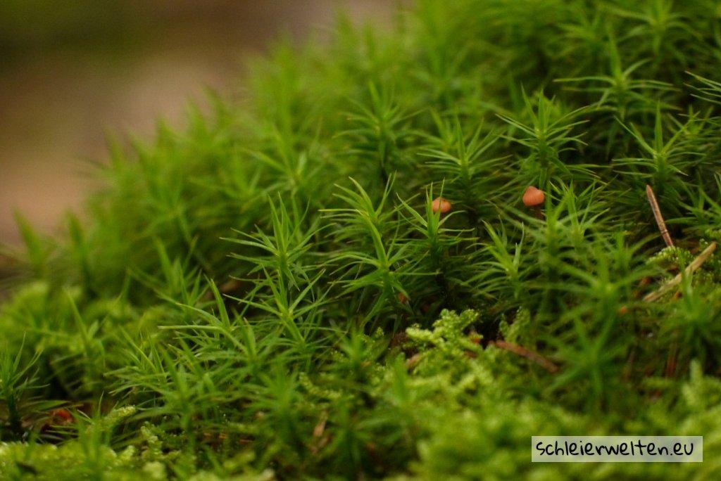Kleine Pilze