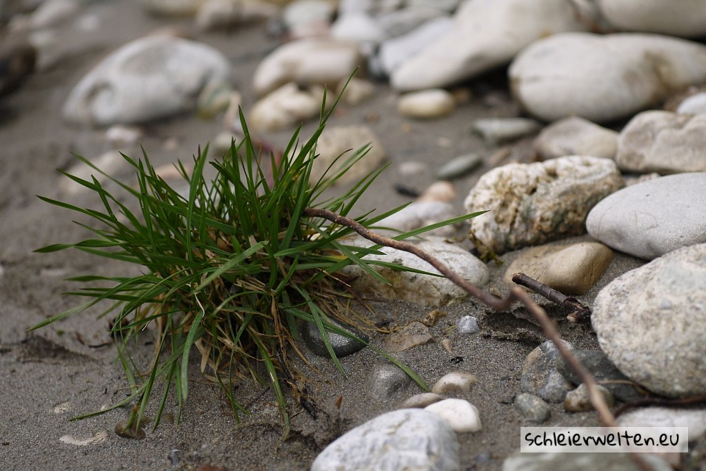 Einsames Grass