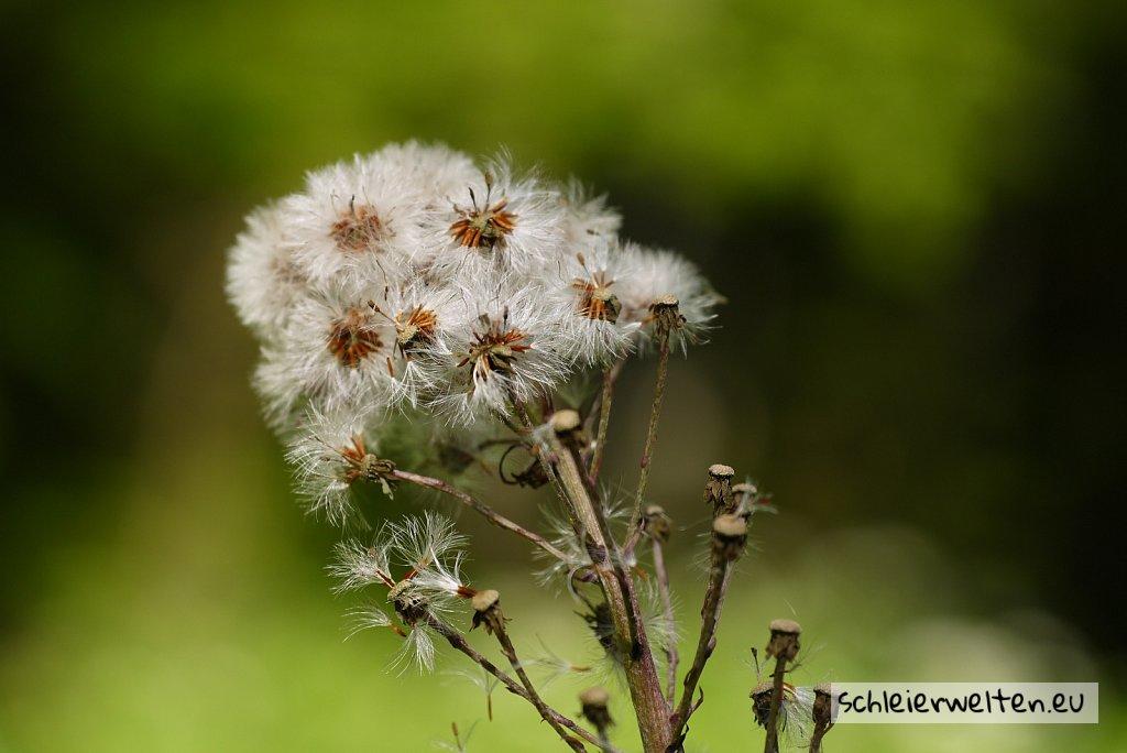 Pelzige Pflanze