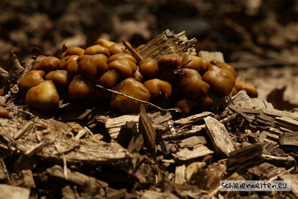 Boden Pilze