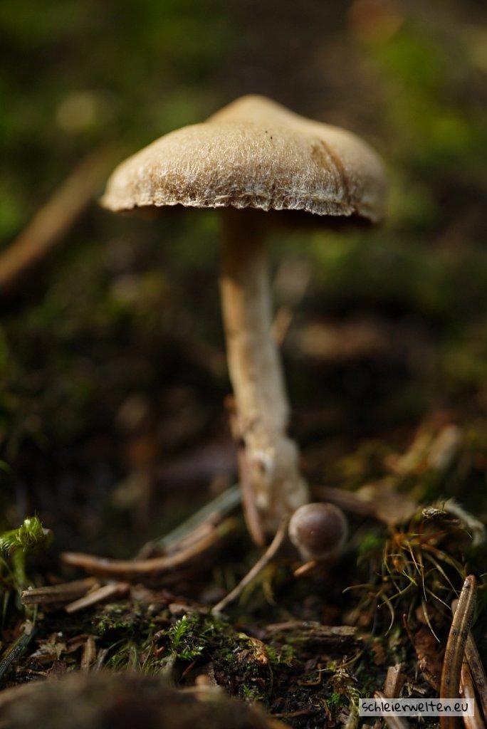 Pilz im Unterholz